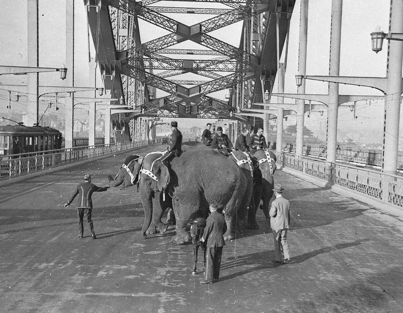 Six Wirths' Circus elephants with their attendants and a Shetland pony crossing the Harbour Bridge for publicity, photograph by Sam Hood, 1933, Home and Away – 5787