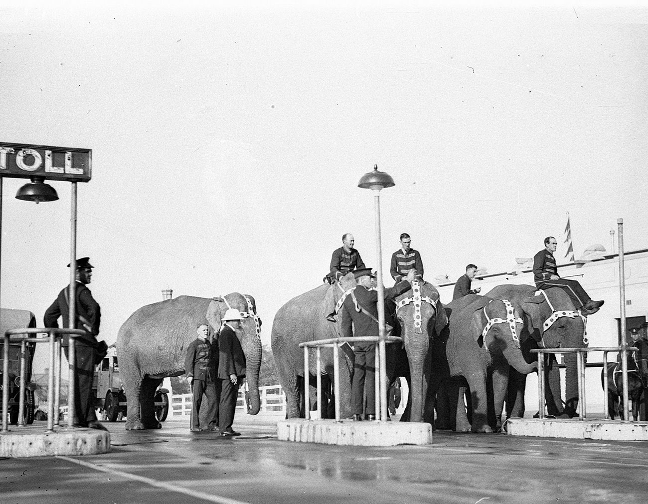 Elephants and their mahouts at Bridge toll-bar, photograph by Sam Hood, 1932, Home and Away – 5791